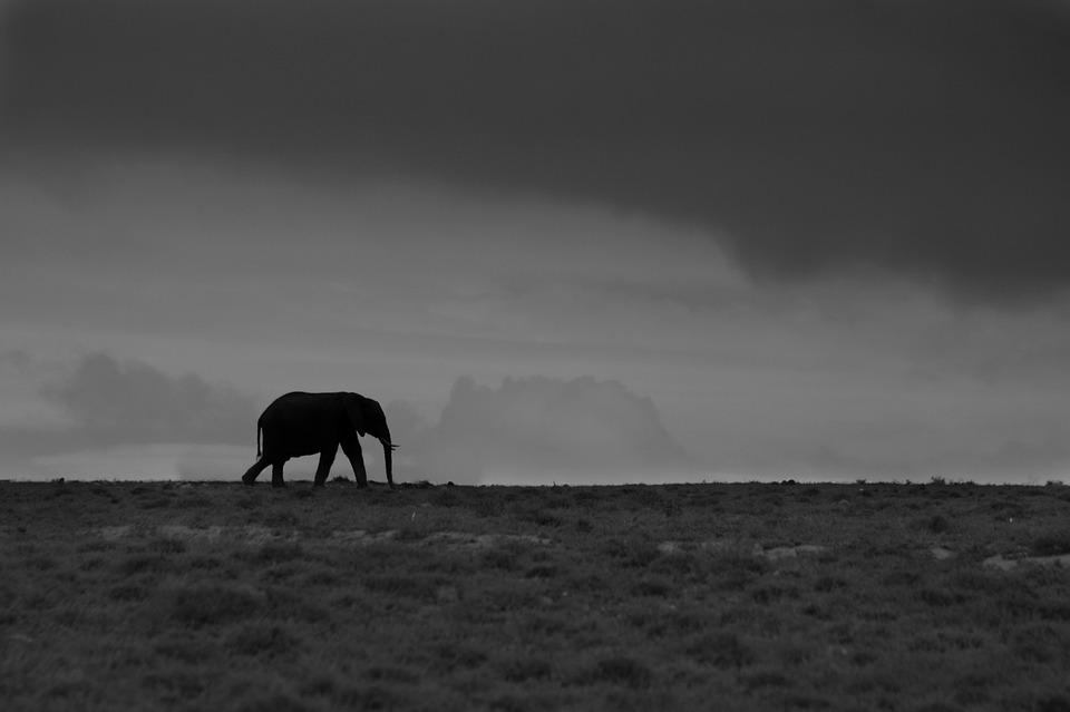 elephant-932220_960_720[1]