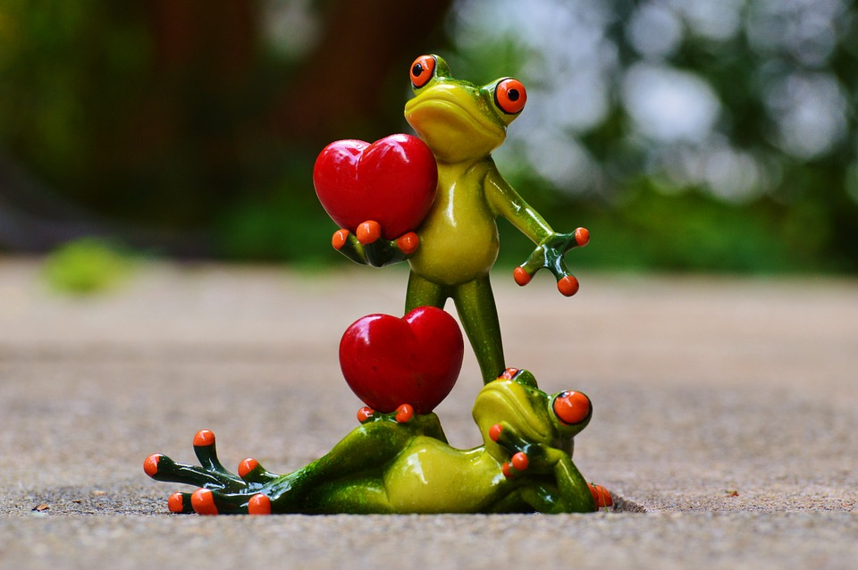 frogs-903176_960_720[1]