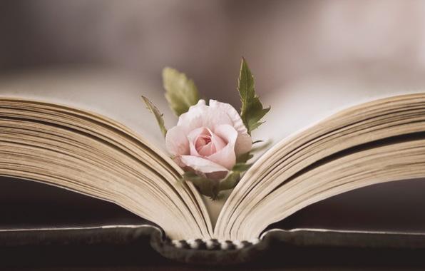 roza-cvetok-kniga-6900[1]