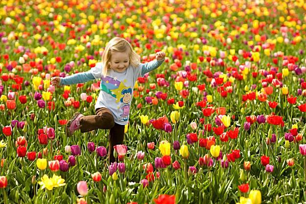 ba-tulip_fest_05014202271